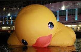 maintenance duck